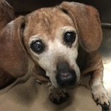 Happy Harlequin (Senior Sanctuary)